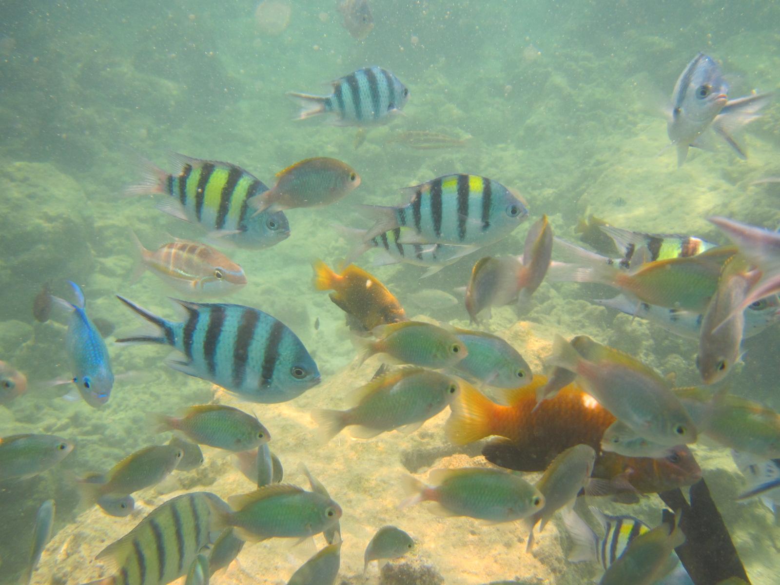 Ikan-ikan cantik dengan aneka warna yang dapat dilihat di Pulau Putri