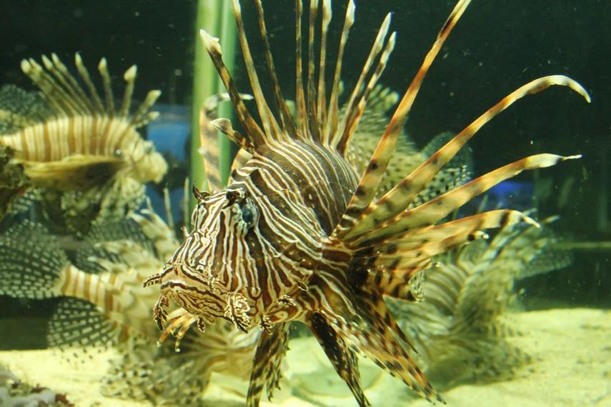 Ikan-ikan dengan bentuk indah yang menjadi koleksi Batu Secret Zoo