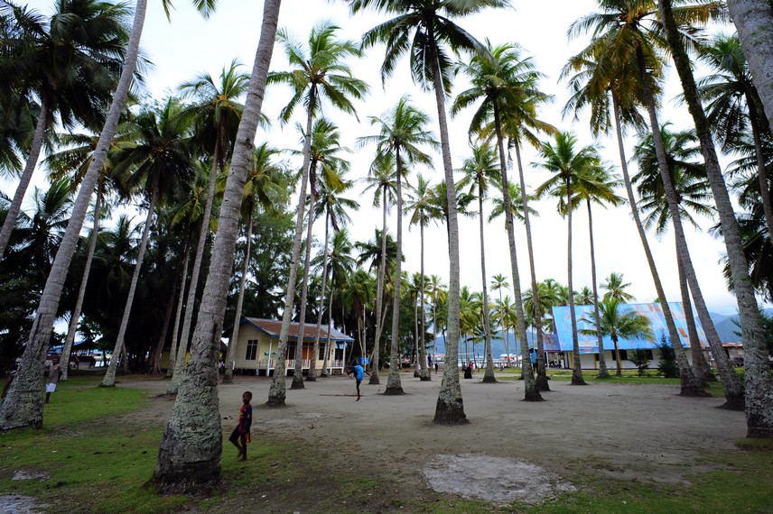 Jajaran pepohonan kelapa yang ada di Pulau Debbie