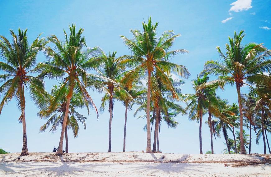 Jajaran pohon kelapa di sekitar Oeseli menambah kesan asri dan sejuk