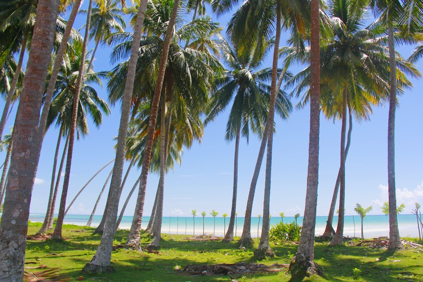 Jajaran pohon kelapa di sepanjang pesisir pantai pun membuat betah tiap pengunjung yang datang