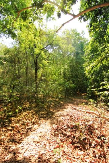 Jalan menuju Air Terjun Mata Jitu dikelilingi pepohonan rindang
