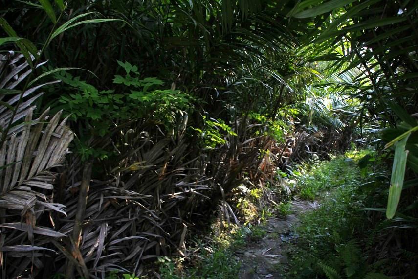 Jalan setapak yang bisa dilalui pengunjung untuk mengelilingi kebun salak di Desa Wisata Agro Bangunkerto