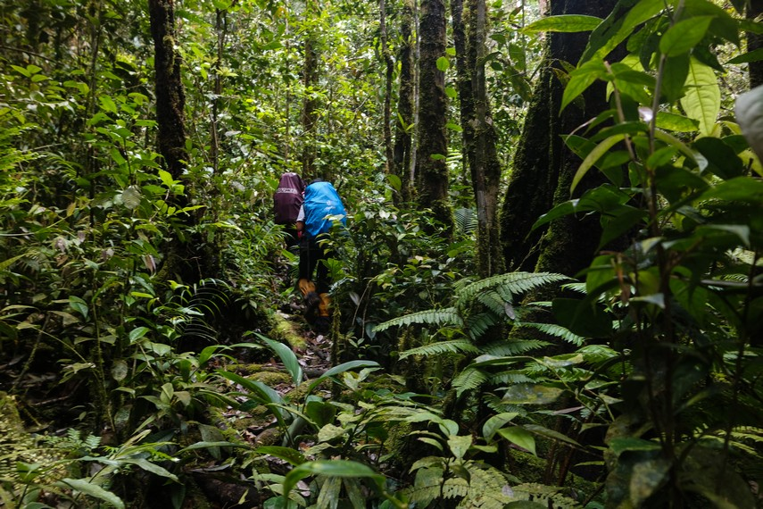 Jalur pendakian Gunung Bukit Raya bisa dibilang masih sangat rapat dan minim petunjuk