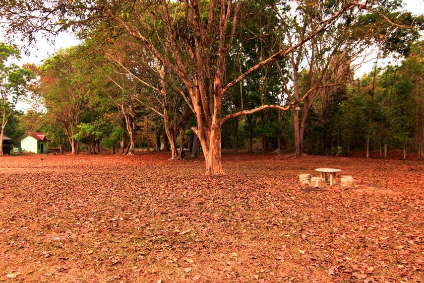 Kawasan Taman Nasional Way Kanan sangat cocok untuk Anda yang menggemari tumbuh-tumbuhan