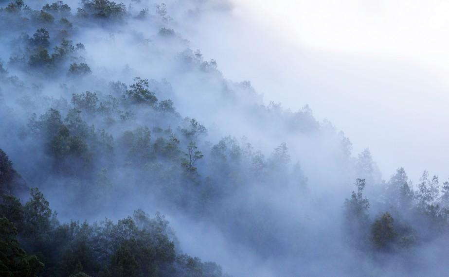 Kawasan hutan di Kelimutu ketika pagi hari, diselimuti kabut