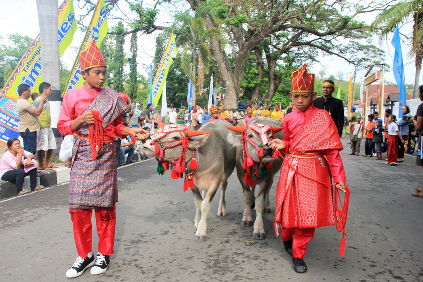Kerbau yang menjadi simbol dari tradisi barapan kebo pun ikut tampil dalam Festival Moyo