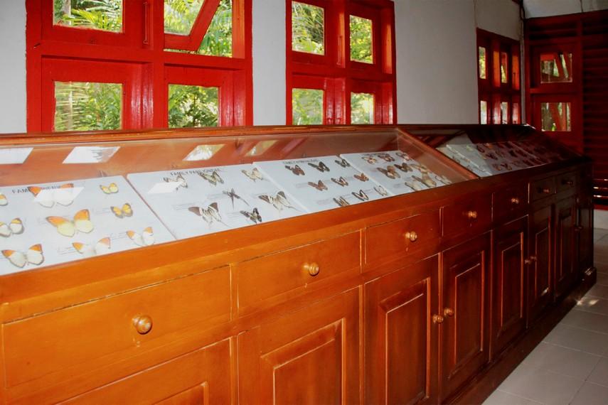 Koleksi kupu-kupu dari berbagai daerah dan negara yang tersimpan di Museum Kupu-kupu Bantimurung