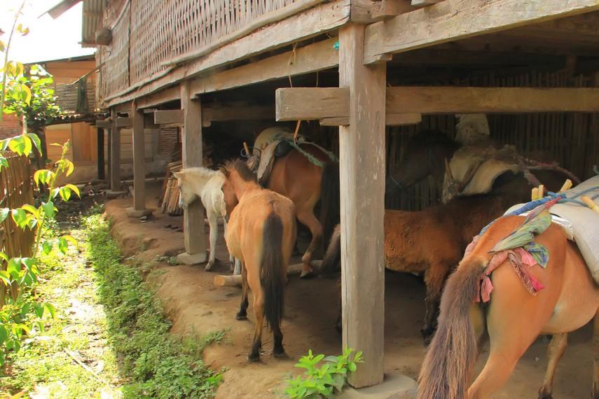 Kuda masih menjadi sarana transportasi yang utama di Desa Lawin