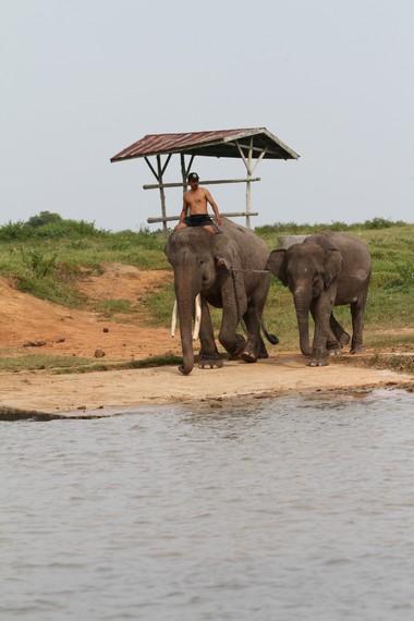 Pelatihan gajah tunggang Taman Nasional Way Kambas