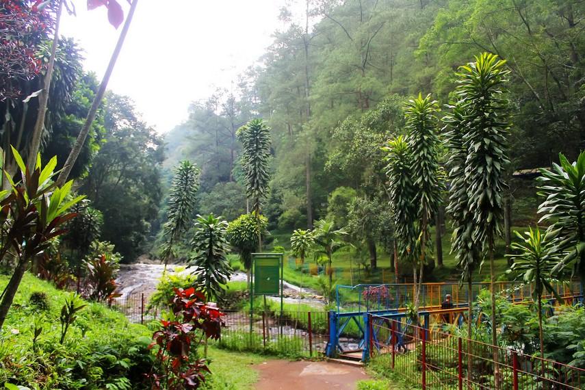 Letak Curug Omas yang dikelilingi hutan