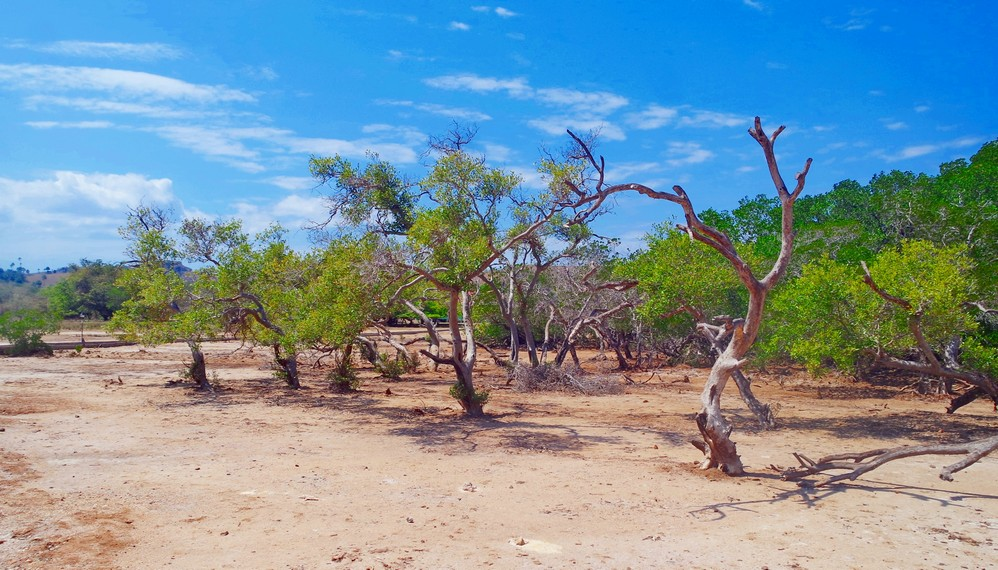 Letak Pulau Rinca sendiri lebih dekat dari Labuan Bajo dibandingkan dengan P Komodo