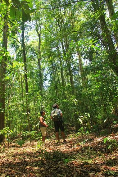 Luas Taman Wisata Alam Batu Putih mencapai sekitar 615 hektar dan di hutan ini menjadi salah satu habitat untuk tarsius dan burung rangkong