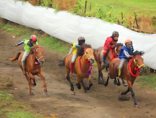 Sandelwood Pony yang Kencang Berlari