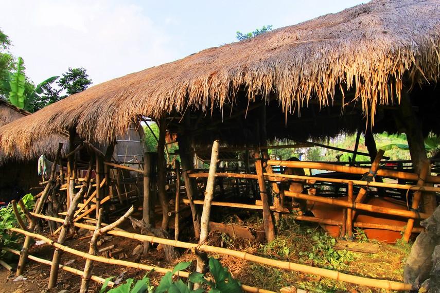 Memelihara hewan ternak menjadi hal yang utama di Dusun Ende