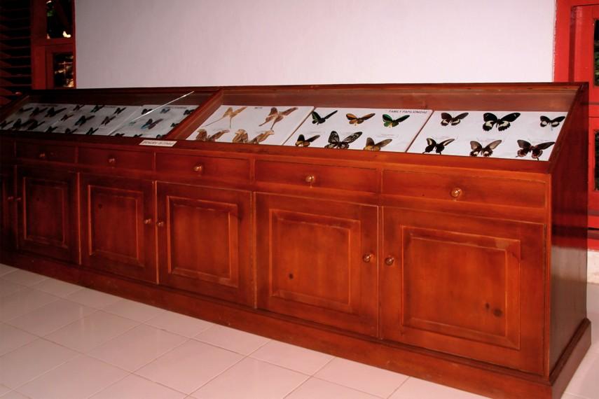 Museum Kupu-kupu Bantimurung merupakan tempat yang cocok untuk memperkaya pengetahuan seputar kupu-kupu