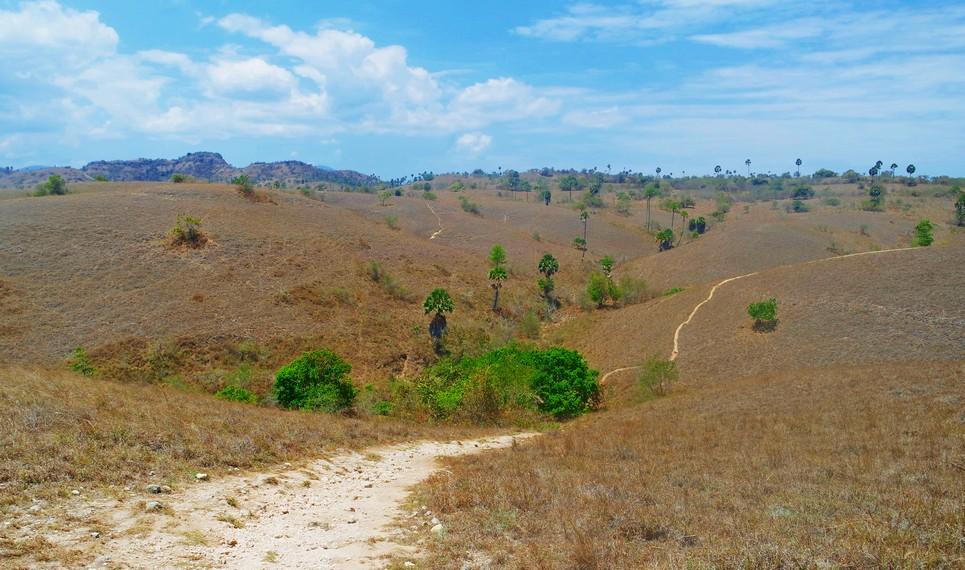 Padang-padang ilalang dan savanna sebagai panorama selama tracking