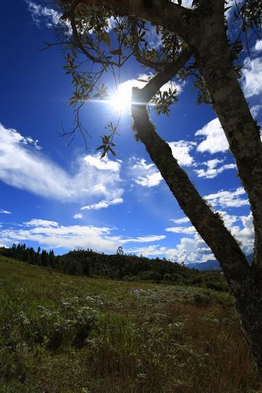 Padang berumput hijau di sekitar Pasir Putih
