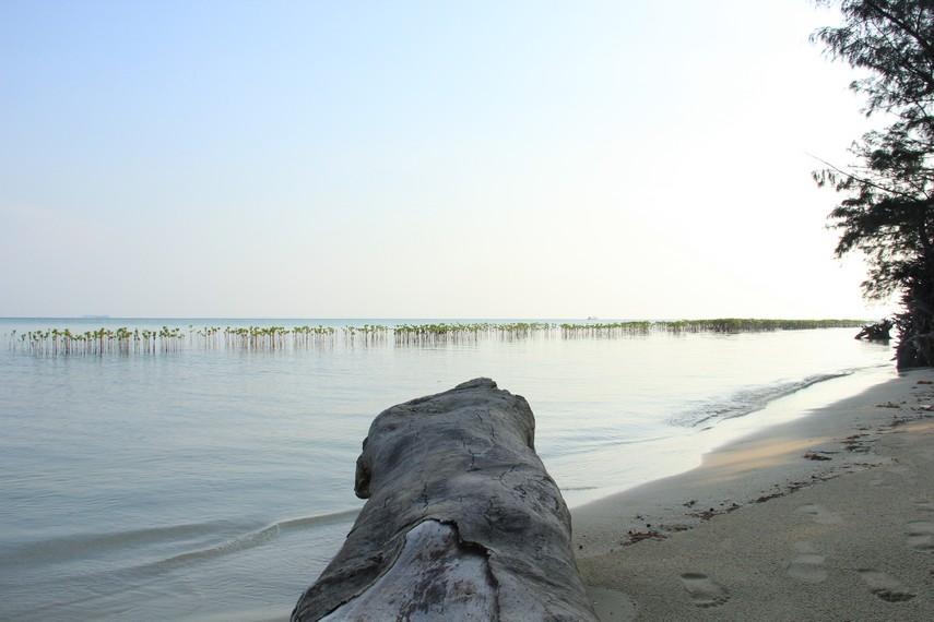 Untuk sampai ke Pulau Semak Daun, Anda bisa menggunakan perahu nelayan dari Pulau Tidung