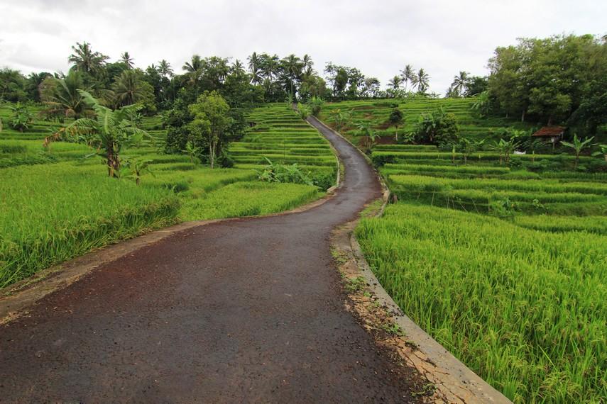 Panorama persawahan menjadi lanskap saat pengunjung melewati jalan-jalan menuju Curug Bangkong