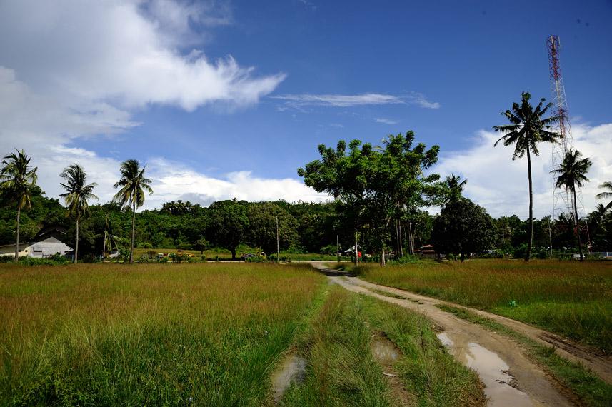 Alam di sekitar Pantai Tanjung Kasuari yang masih natural