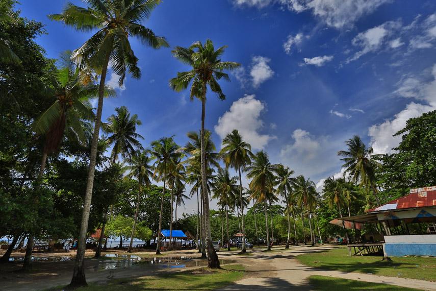 Deretan pepohonan kelapa di Pantai Tanjung Kasuari