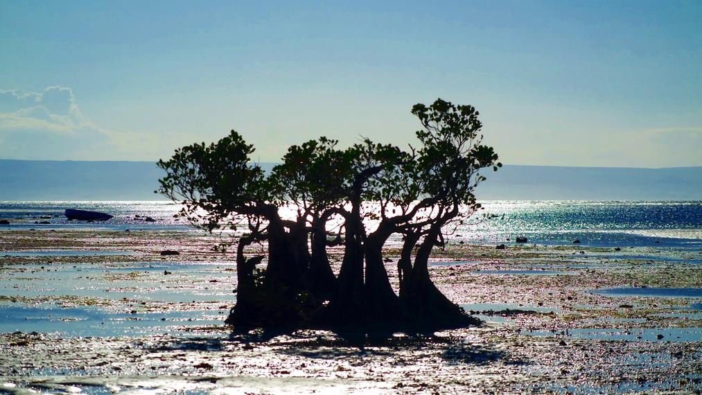 Pantai Walakiri dapat ditempuh sekitar 30 menit perjalanan dari Waingapu