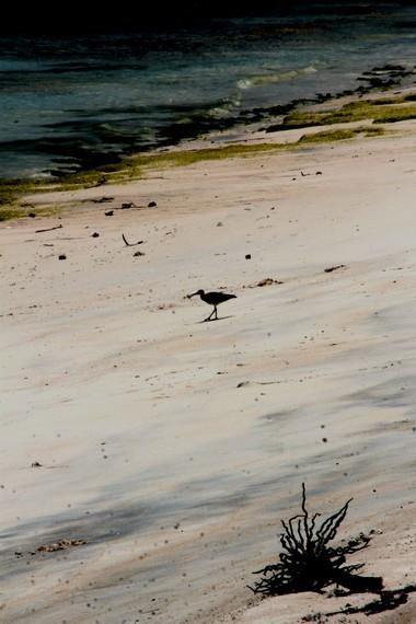Pantai ini juga menjadi tempat hinggapnya burung-burung pesisir