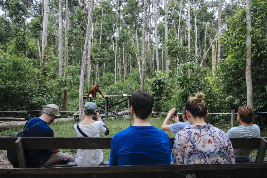 Para pengunjung bisa melihat kegiatan feeding atau memberi makanan di tiga camp yang berbeda