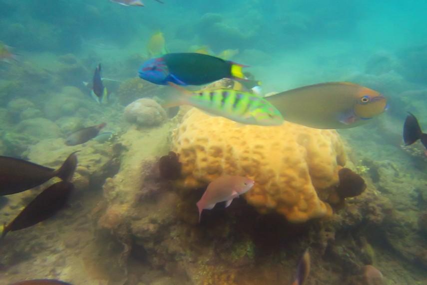Pemandangan alam bawah laut Gili Nanggu yang tidak kalah cantik dengan pemandangan pantainya
