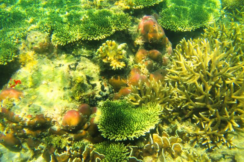 Pemandangan yang tersaji di bawah laut Pulau Samalona