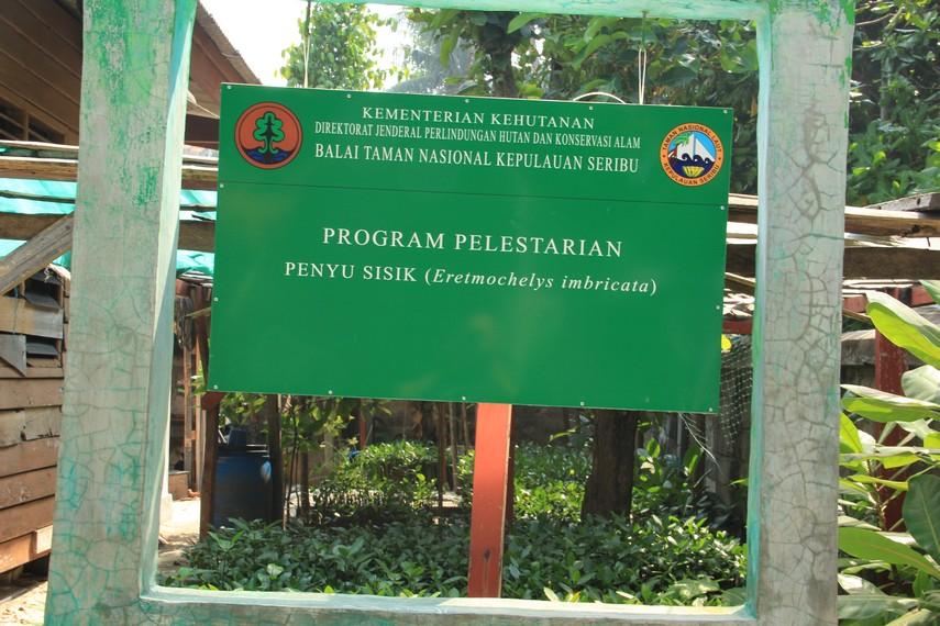Penangkaran penyu sisik di Pulau Pramuka sudah dilakukan sejak tahun 1984