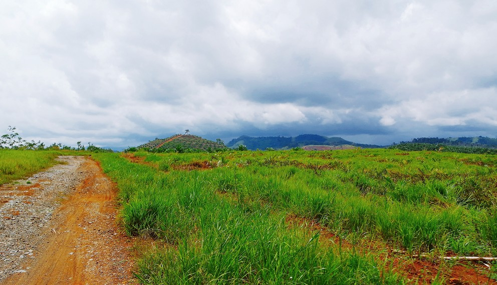 Pengunjung akan melewati area perkebunan sawit sebelum memasuki kawasan perbukitan
