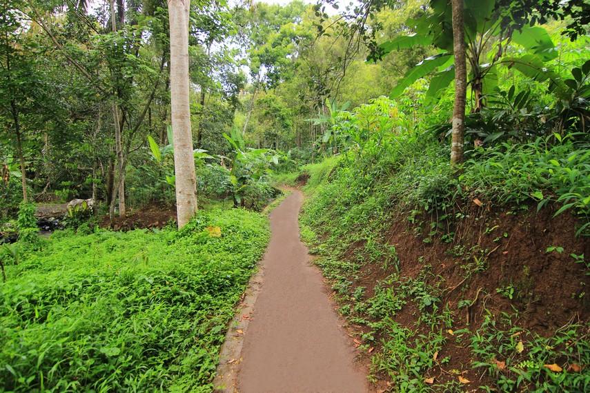 Pengunjung akan melewati jalan setapak dengan pemandangan hijaunya pepohonan sebelum tiba di Curug Bangkong