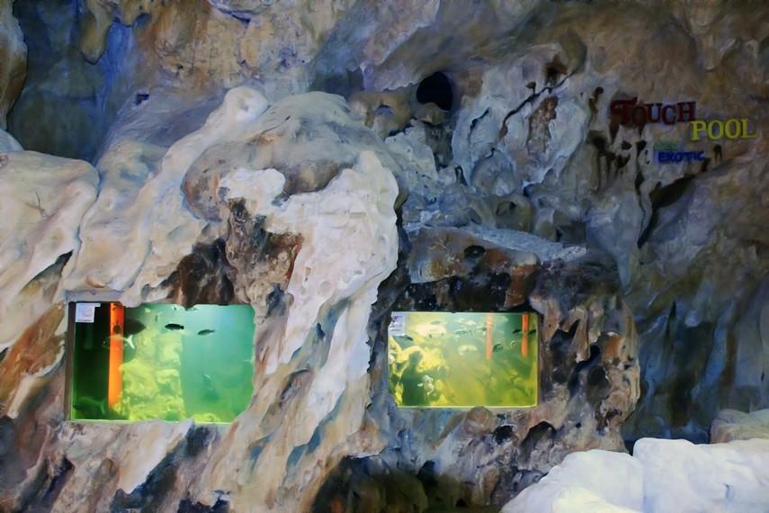 Pengunjung bisa melihat penangkaran penyu sisik di Kura-Kura Ocean Park