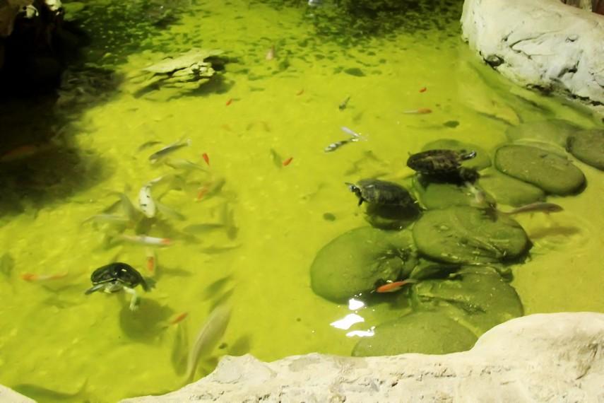 Pengunjung dapat menyentuh ikan dan kura-kura yang berada di kolam sentuh