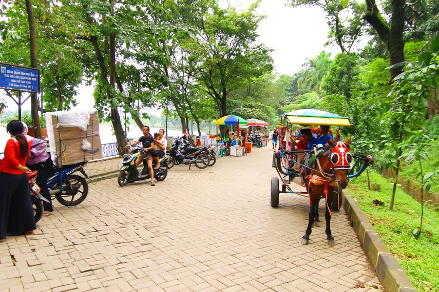 Pengunjung juga bisa berkeliling kawasan Setu Babakan menggunakan Andong yang ada di sekitar tempat ini