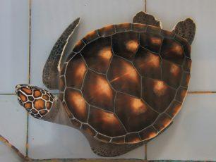 Konservasi Penyu Pulau Serangan, Melestarikan Keberadaan Reptil Bercangkang