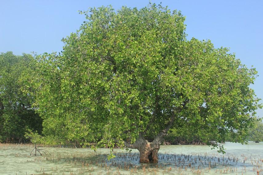 Pepohonan yang banyak tumbuh di Pulau Pari menjadikan pulau ini terasa begitu teduh