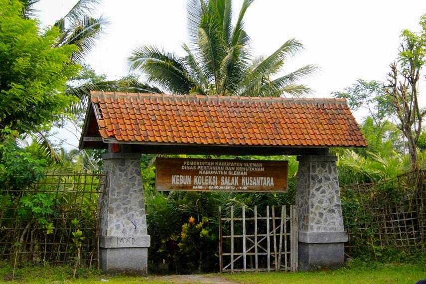 Pintu masuk bagi para pengunjung menuju kawasan budidaya salak di Desa Wisata Agro Bangunkerto