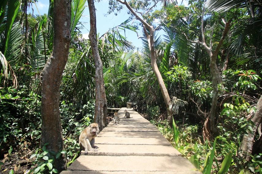 Pulau Kembang yang termasuk di dalam wilayah Kecamatan Alalak, Kabupaten Barito Kuala