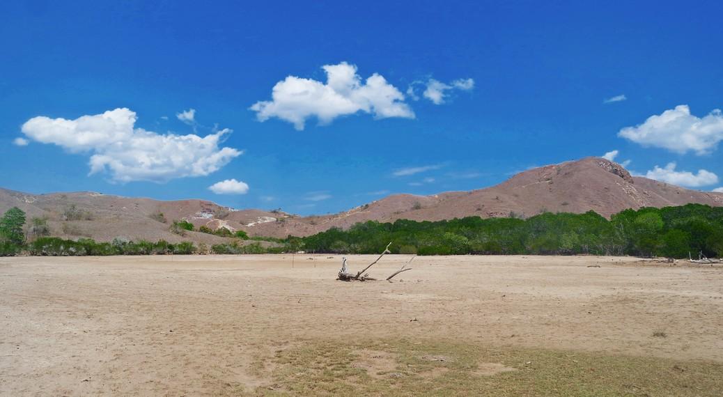 Pulau Rinca saat ini menjadi habitat asli komodo dengan populasi terbanyak kedua setelah Pulau Komodo
