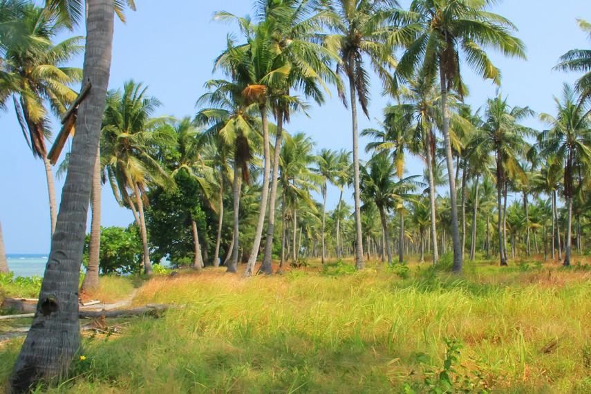 Pulau Tidung juga banyak ditumbuhi pohon-pohon kelapa yang menghadirkan hembusan kesegaran angin