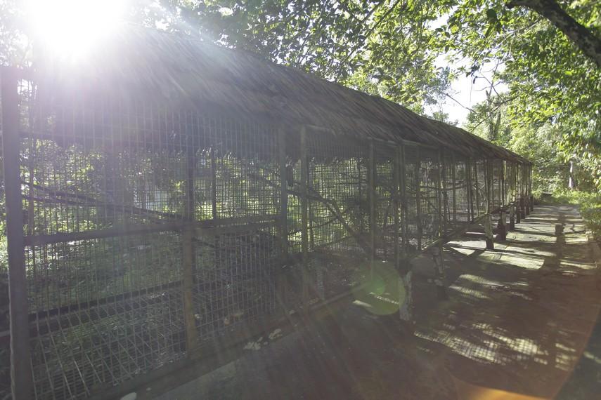 Pusat Rehabilitasi Satwa di Taman Nasional Manusela