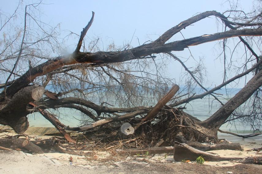 Ranting-ranting pohon yang telah usang banyak kita jumpai di Pulau Bira