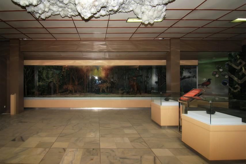 Ruang Koleksi Biologi di sisi depan Museum Negeri Lampung