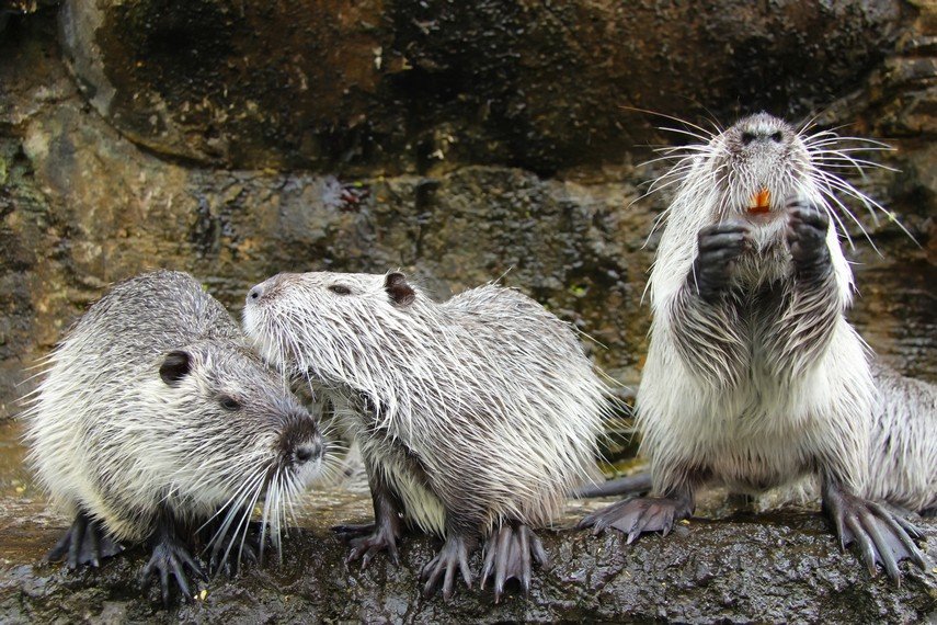 Salah satu hewan koleksi yang ada di Batu Secret Zoo