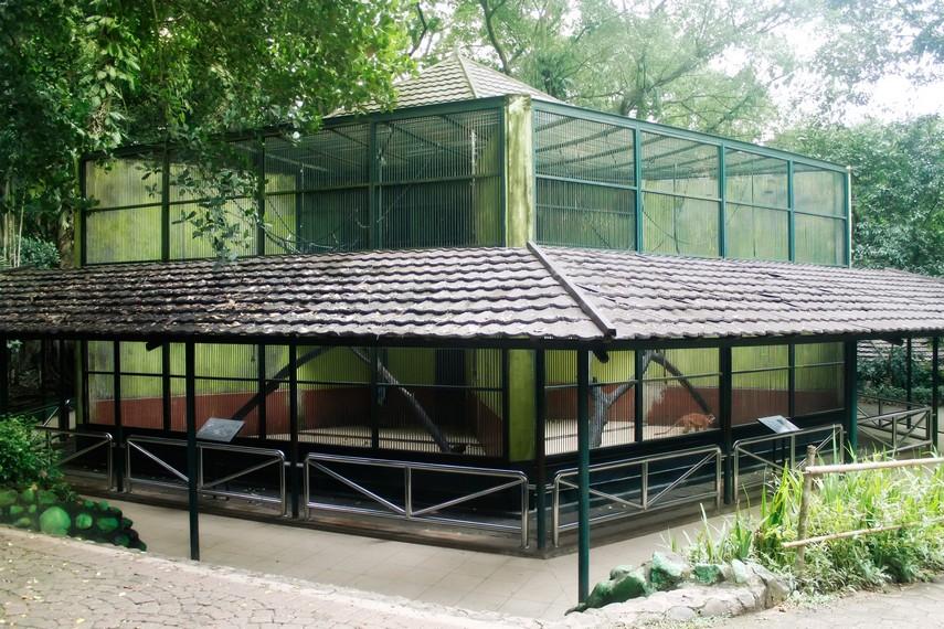 Salah satu kandang yang berisi kera yang menjadi koleksi kebun binatang ini