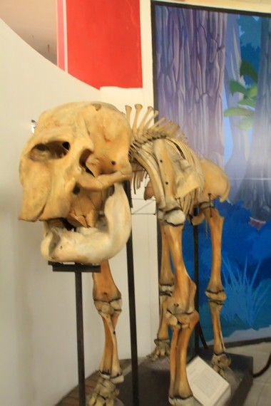 Salah satu kerangka hewan purba di Museum Ranggawarsita