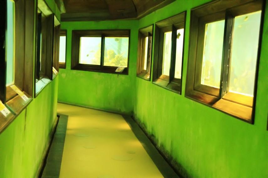 Salah satu lorong yang di kanan-kirinya terdapat kolam-kolam agar pengunjung dapat melihat ikan dari dekat